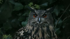 Eagle Owl in the dark Stock Footage