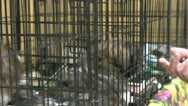Stock Video Footage of Person petting dog in cage