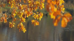Autumn leaves 003 Stock Footage