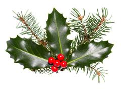 Holly leaves and berries isolated on a white background Stock Photos