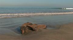 Tree washed on the beach in Kuta, Bali Stock Footage