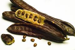 The carob (ceratonia siliqua) Stock Photos