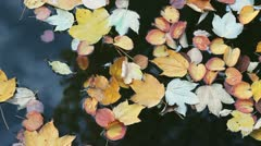 Stock Video Footage of autumn leaves