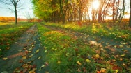 Stock Video Footage of autumn road