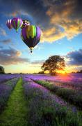 Hot air balloons flying over lavender landscape sunset Stock Photos