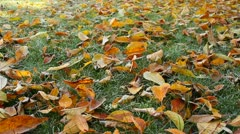 Frosty leaves falling on a lawn Stock Footage
