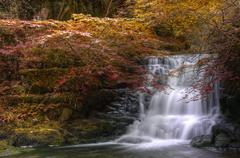 Waterfall flowing through autumn fall forest landscape Stock Photos