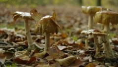 Mushrooms and fungi in the forest Stock Footage