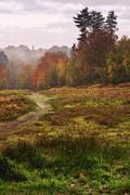 Stock Photo of beautiful autumn fall forest vibrant landscape
