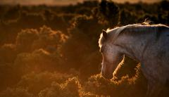 Beautiful image of new forest pony horse backlit by rising sun in landscape w Stock Photos