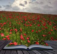 creative concept image of poppy field coming out of pages in book - stock photo