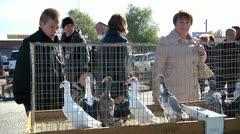 bird market 1 - stock footage