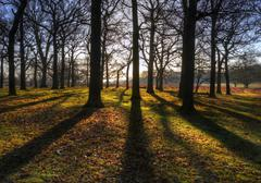 Sunbeams and long shadows in Autumn forest - stock photo
