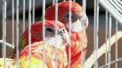 Parrots at the exhibition 1 Stock Footage