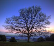 single bare winter tree against vibrant sunset - stock photo