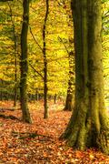 stunning colorful vibrant autumn fall forest landscape - stock photo