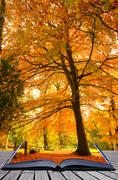 creative concept idea of beautiful autumn fall forest scene in pages of magic - stock photo
