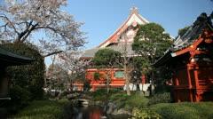 Asakusa Kannon Temple, Cherry Tree Blossom, Sensoji Temple in Tokyo, Japan Stock Footage