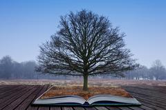 single tree growing out of pages in magic book - stock photo