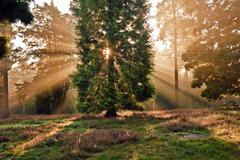 Inspirational dawn sun burst through trees in forest autumn fall Stock Photos