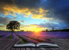 Creative concept image of  atmospheric sunset  lavender fields in pages of ma Stock Illustration