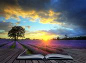Stock Illustration of creative concept image of  atmospheric sunset  lavender fields in pages of ma