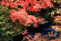 Autumn foliage in Japan - stock photo