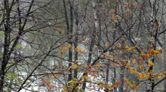 First autumn snow Stock Footage