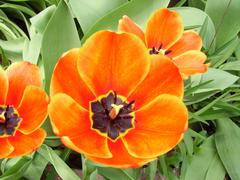 Bright vibrant flowers - stock photo