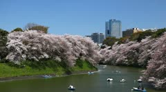 Chidorigafuchi in Tokyo, Beautiful Cherry Blossom, Japan, Imperial Palace Area Stock Footage