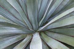 Succulent plant detail Stock Photos