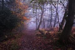 Path through foggy misty autumn forest landscape at dawn Stock Photos