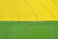 Rural landscape overlooking bright yellow fields of rapeseed Stock Photos