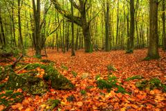 Stock Photo of stunning bright autumn fall forest landscape vibrant colors
