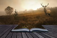 Red deer stag in landscape coming out of pages in book creative concept iamge Stock Photos