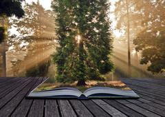 inspirational sunbeams autumn fall forest landscape coming out of magic book - stock photo