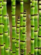 striped plant stems - stock photo