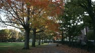 Stock Video Footage of salem common october