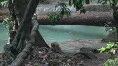 Thailand kanchanaburi erawan monkeys Stock Footage