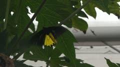 Malaysia cameron highlands butterfly farm 3 Stock Footage