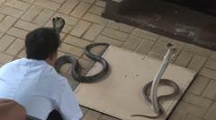 Thailand Bangkok snake farm - stock footage