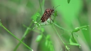 Graphosoma lineatum moves on a tree branch Stock Footage