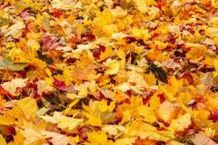 Fall orange and red autumn leaves on ground Stock Photos