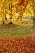 Color composition in autumn park Stock Photos