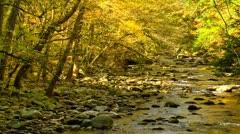Beautiful autumn river Stock Footage