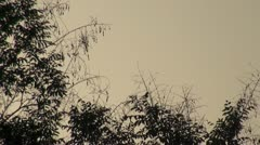 Swallows fly in the night sky above the trees - stock footage