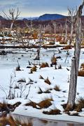 A Snowy Wasteland Stock Photos