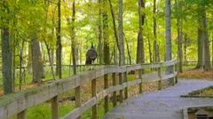 Mammoth Cave National Park Turkey in Woods 2 HD Stock Footage