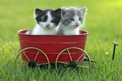 Stock Photo of kittens outdoors in natural light