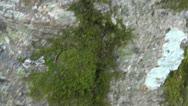 Black Ant on Tree 1 HD Stock Footage